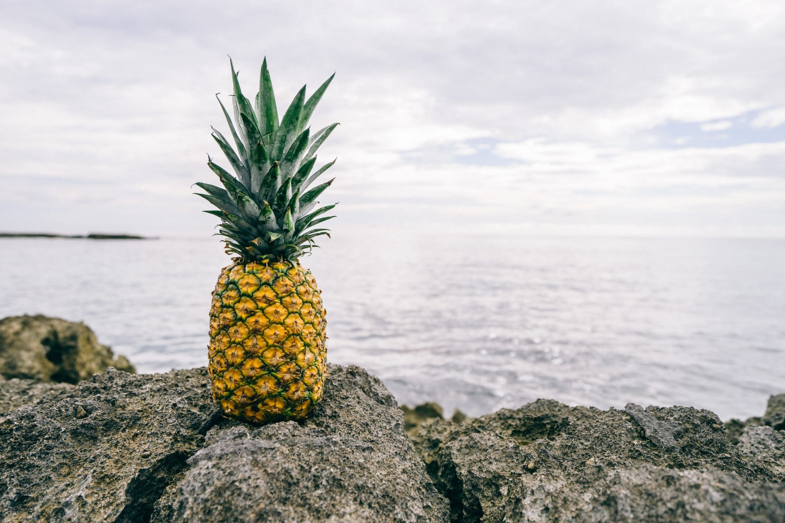 Ananas mit Blick aufs Meer - 3 Jahre sind nicht genug!